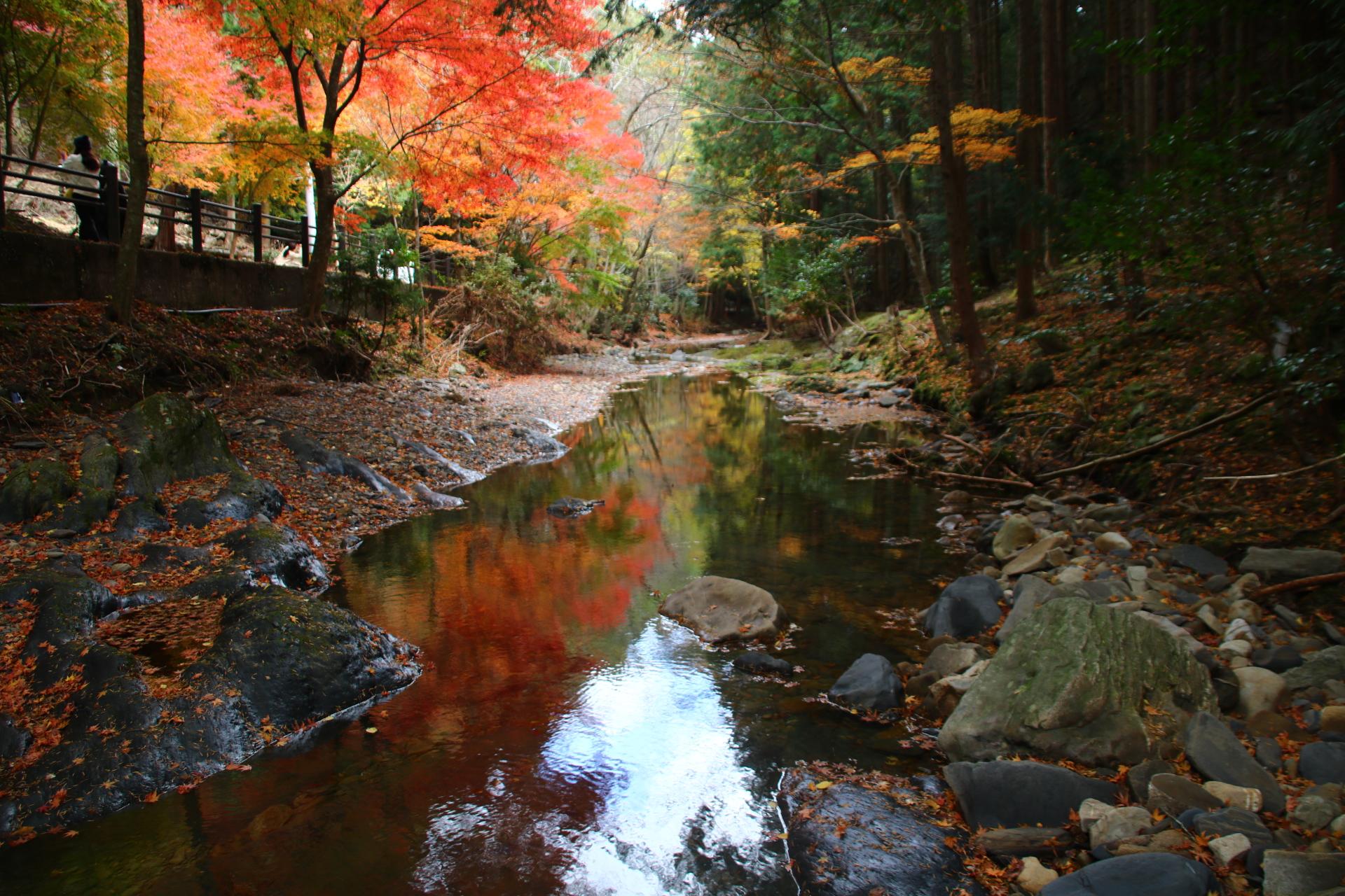 【ORC島鉄フォトコン】秋を映して @tahkinoyaさん