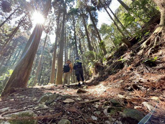 【2021フォトコン】木立にいる子達 (対馬 洲藻)@みさかなさん
